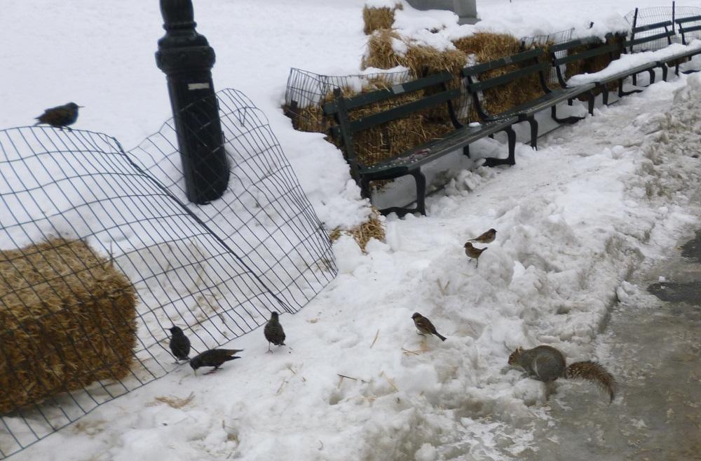 画像9 セントラル・パークの鳥とリス