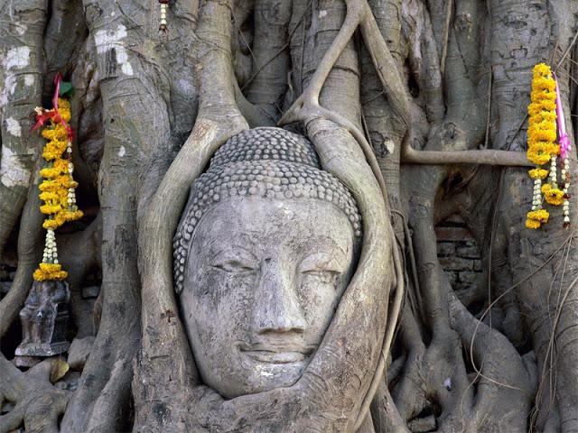 画像14 ワット・プラ・マハタート大仏の頭